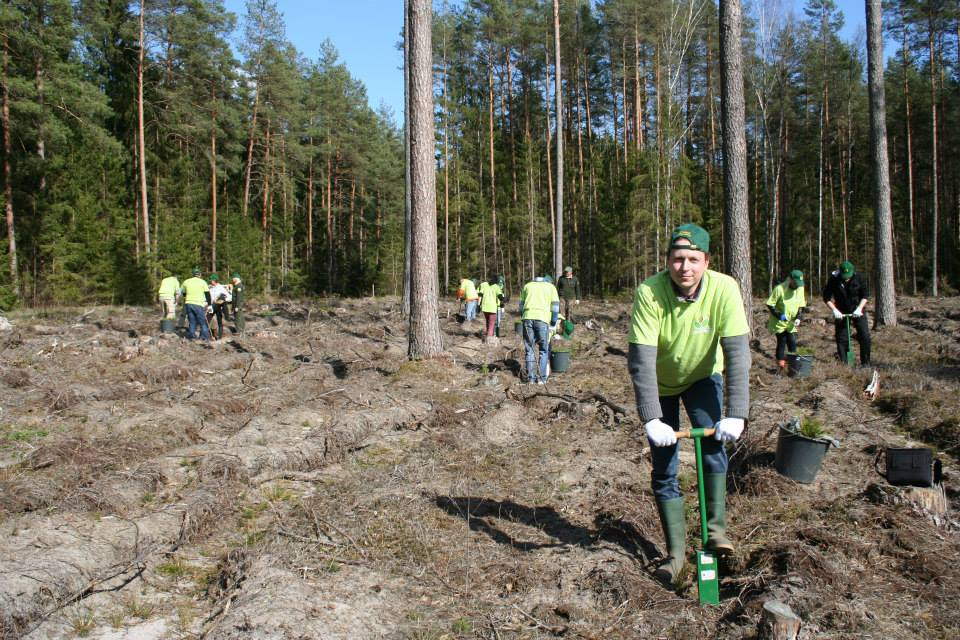miško sodinimas